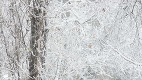 Snow-covered trees in snowfall weather stock video footage