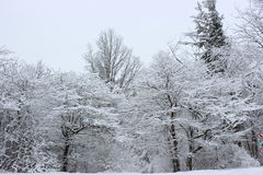 Snow covered trees. In Southern Quebec royalty free stock photos
