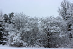 Snow covered trees. In Southern Quebec stock photography