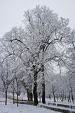 Snow covered trees after storm. A view of trees covered with snow after a recent snowstorm Stock Image