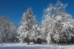 Snow-covered trees and summerhouse Stock Images