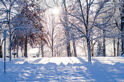 Snow covered trees in sunlight Stock Photos