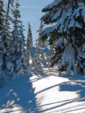 Snow covered trees on sunny day. Snow covered conifer trees on a sunny mountain day Stock Photography