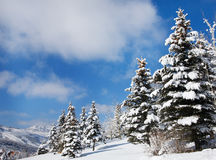 Snow-Covered Trees on a Sunny Day, Utah Royalty Free Stock Photos