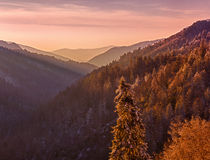 Snow covered trees at sunset in Smoky Mountains Stock Photo