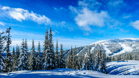 Snow covered trees surrounding the ski slopes at the village of Sun Peaks Royalty Free Stock Photo