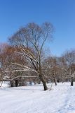 Snow-covered trees in urban park Royalty Free Stock Photos