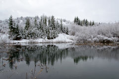 Snow-covered trees on the water Stock Photos