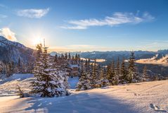 Snow covered trees with Whistler Creekside valley in the background. royalty free stock images