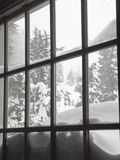 Snow covered trees through window Stock Images
