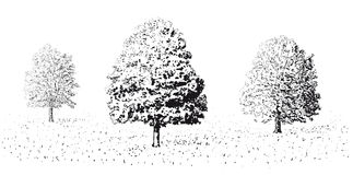 Snow covered trees in winter. Illustration of three snow covered trees in wintry countryside, white background Royalty Free Stock Image