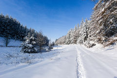 Snow covered trees in winter. A snowy track winds past snow covered fir trees in a remote area royalty free stock photos