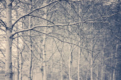Snow-covered trees Stock Photography
