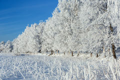 Snow covered trees on a winter day Royalty Free Stock Photos