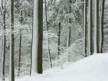 Snow covered trees in winter forest. Winter forest with frosted trees and fresh snow on the ground. Shot in the middle of winter. This is not black and white Stock Photos