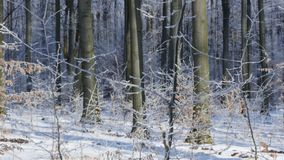 Snow covered trees in the winter forest stock video footage