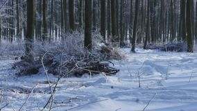 Snow covered trees in the winter forest stock video