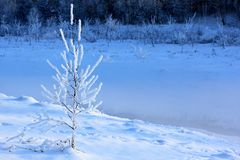 Snow covered trees in winter forest royalty free stock images
