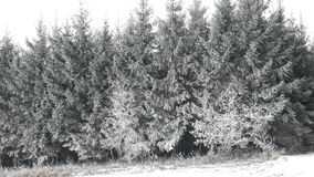 Snow covered trees. Winter forest. Beautiful winter landscape. Scenic winter landscape. Winter foggy landscape stock video footage