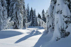 Snow covered trees in a winter forest Stock Photos