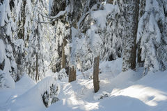 Winter scene Cypress mountain Stock Photos