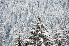 Snow covered trees in winter forest Stock Photos