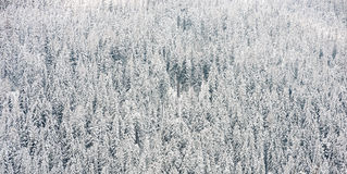 Snow covered trees in winter forest Royalty Free Stock Photos