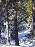 Snow covered trees in winter forest. Winter forest with frosted trees and fresh snow on the ground stock photos