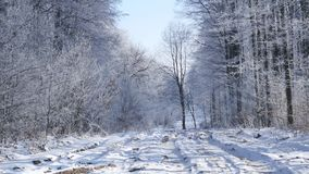 Snow covered trees in the winter forest with road stock video