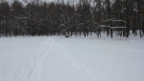 Snow covered trees in the winter forest with road. Blizzard and snowfall stock video footage