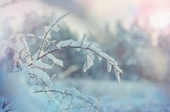 Winter season royalty free stock image