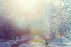 Winter season royalty free stock photos