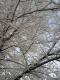Snow covered trees in winter. Horizontal photo royalty free stock photos