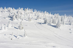 Snow Covered Trees in Winter landscape. A snow covered forest in the deep winter season at a ski resort in Canadas Mountains Royalty Free Stock Image