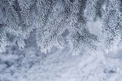 Snow-covered trees in winter park Stock Photo
