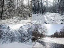 Snow covered trees, winter scenes, set of images Stock Photos