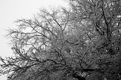 Snow covered trees in winter. Scenic view of snow covered bare tree branches in winter stock photo
