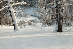 Snow-covered trunks of birches in the winter slope with brook Royalty Free Stock Photography