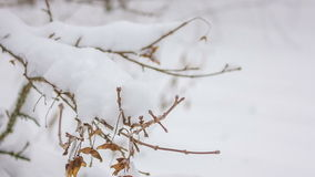 Snow-covered twig. Close up stock footage