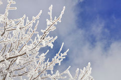 Snow covered vegetation Stock Photography