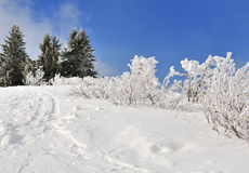 Snow covered vegetation Royalty Free Stock Images