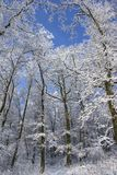 Snow-covered Wald Stockbild