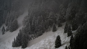 Snow-covered Wald Lizenzfreie Stockbilder