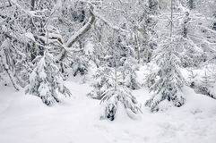 Snow-covered Wald des Winters Lizenzfreies Stockbild
