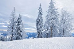 Snow-covered Wald des Winters Stockfoto