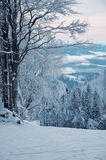 Snow-covered Wald des Winters Lizenzfreie Stockbilder