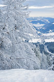 Snow-covered Wald des Winters Stockbild