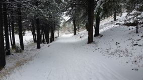 Snow-covered Walk Royalty Free Stock Photos