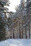 Snow-covered weg in het bos ergens in Siberië Royalty-vrije Stock Afbeeldingen