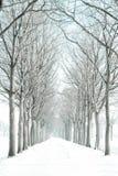 Snow-covered weg van bomen royalty-vrije stock foto's